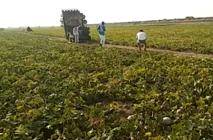 Viral Video: UP Farmer Plays DJ Music To Scare Away Locusts!