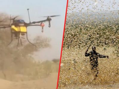 Drones Used To Spray Chemicals To Drive Away Locusts In Rajasthan