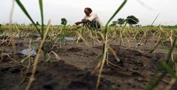 Deficient rainfall may hit rice output - Sakshi Post