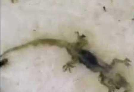Lizard found in a midday meal in Warangal - Sakshi Post