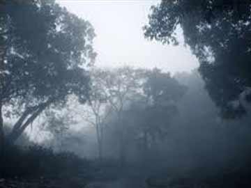 Lambasingi fog kills one, injures another - Sakshi Post