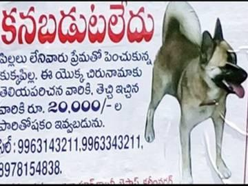 This Couple announces Rs 20000 for their missing pet - Sakshi Post