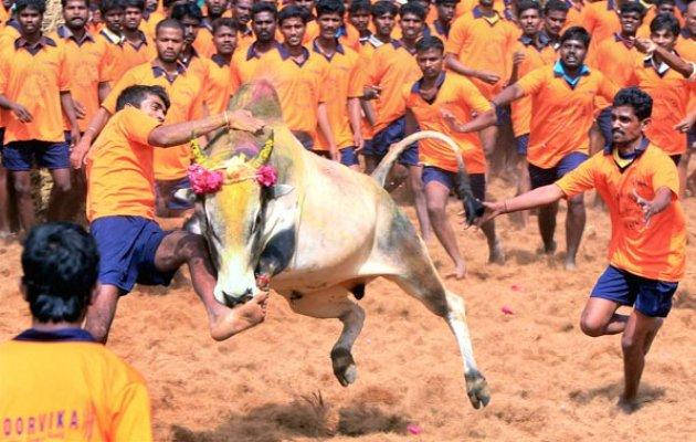 Political parties, including DMK, have been pressing the Centre and state government to take steps to hold the sport coinciding with Pongal, the Tamil harvest festival, this year - Sakshi Post