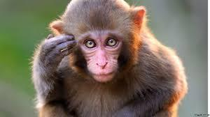 To save the monkey, Ramesh made a sudden swerve, lost balance and fell down - Sakshi Post