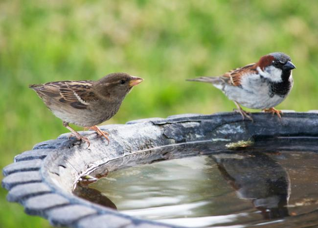 The Nature Forever Society of India has started an international initiative to mark March 20 as World Sparrow Day - Sakshi Post