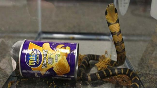 The 6-feet long reptile spotted moving beneath a couch and immediately rushed out of the lounge - Sakshi Post