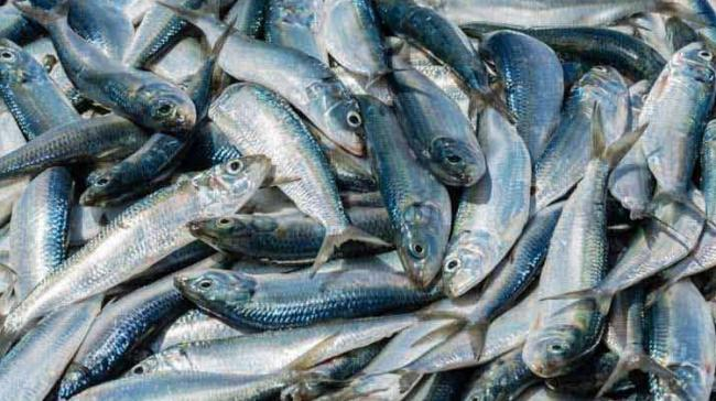 Even as the controversy surrounding the use of formalin in fish sold in Goa continues to rage in the coastal state, a senior official of the Goa Cancer Society - Sakshi Post