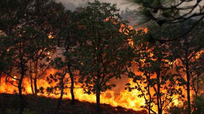 Emergency Declared In Southern Mexico As Forest Fires Rage - Sakshi Post