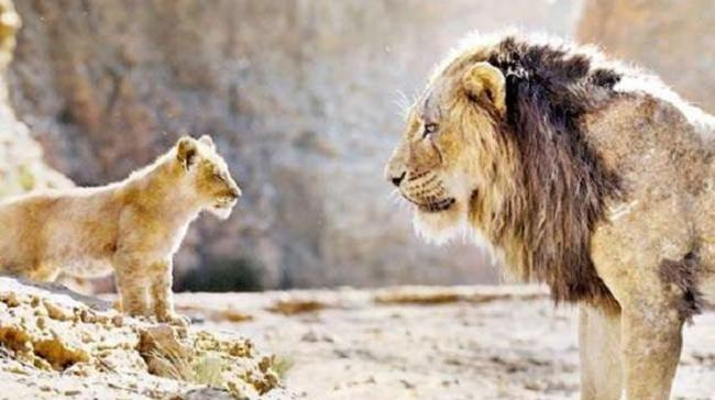 """Walt Disney's """"The Lion King"""" is rocking at the Indian box office. The movie made Rs 81.57 crore in the first week itself - Sakshi Post"""