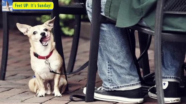 Pet-friendly Restaurants In Hyderabad - Sakshi Post