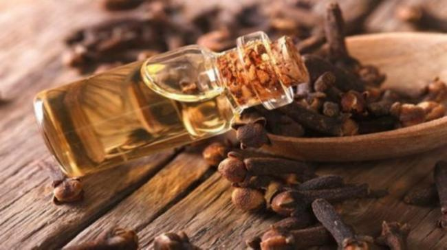 Cloves and it's oil - Sakshi Post