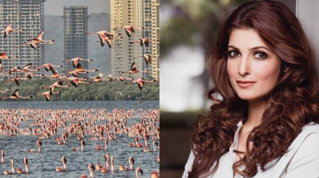 Twinkle Khanna Shares flamingo migration pics - Sakshi Post