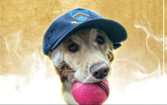ICC Dog Of The Month - Sakshi Post